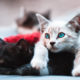 COVID-19: Two Cats Test Positive For Coronavirus Disease