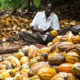 Africa Is The Largest Producer of Cocoa in The World Jo Thys