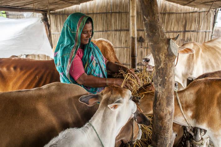 FAO Livestock