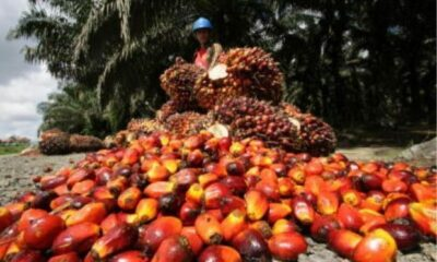 Okomu Oil Palm Records N20.50bn Revenue...PAT up by 46.28% to N7.39bn
