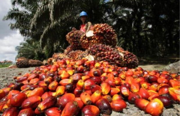 Okomu Oil Palm Records N20.50bn Revenue...PAT up by 46.28% toN7.39bn