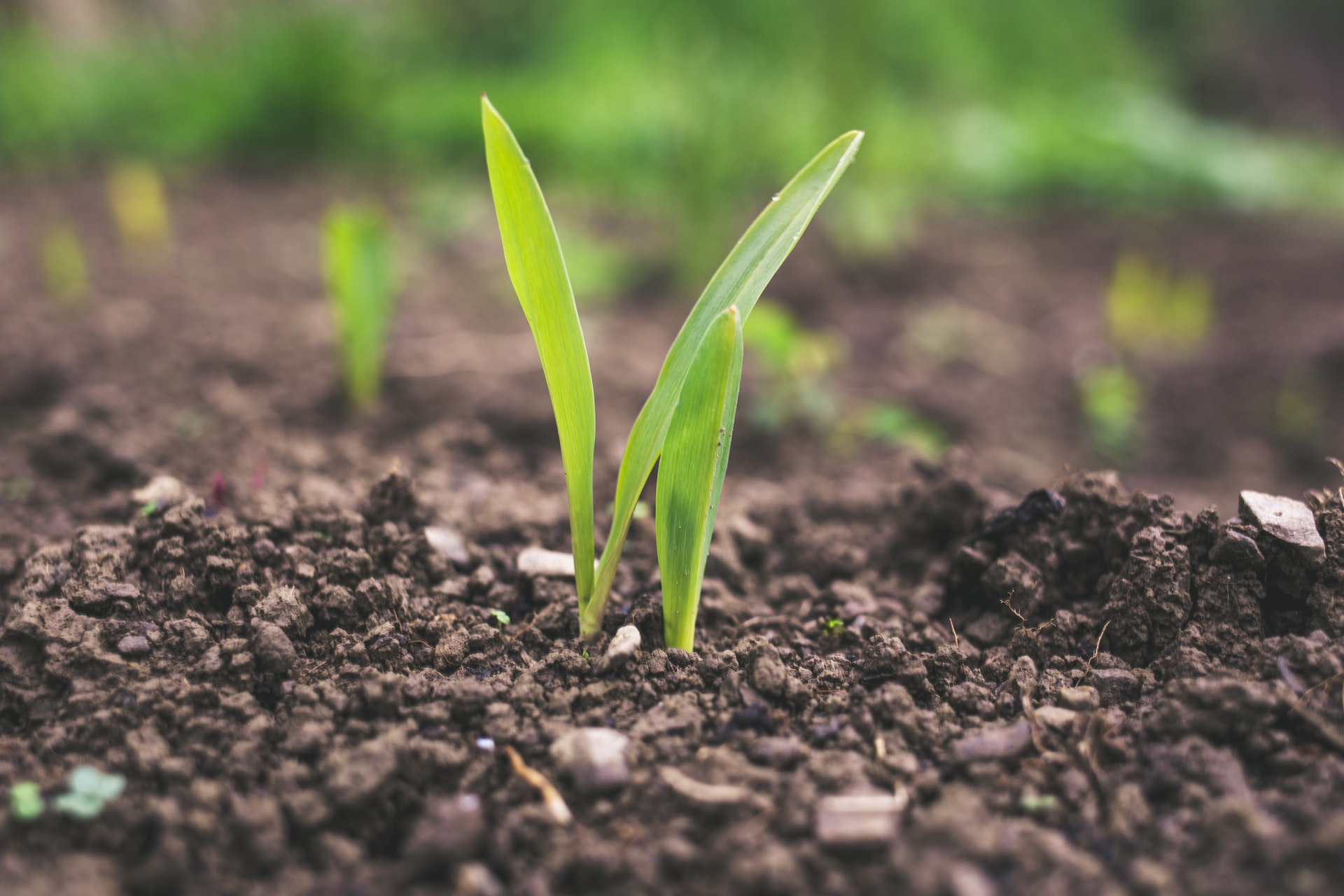 Agriculture sector in 2021 Still a growth story Brandnewsday