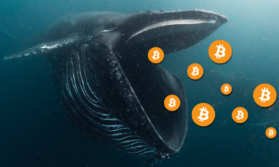 cryptowhale tracker,bitcoinwhaleslist,bitcoin whale definition,known bitcoin whales, bitcoin whale chart, whale alert -- telegram,biggest bitcoin whales, bitcoin account, bitcoindollar, how to get bitcoins, bitcoinapp, bitcoinlogin,bitcoinwallet, bitcoininvestment,how to buybitcoin