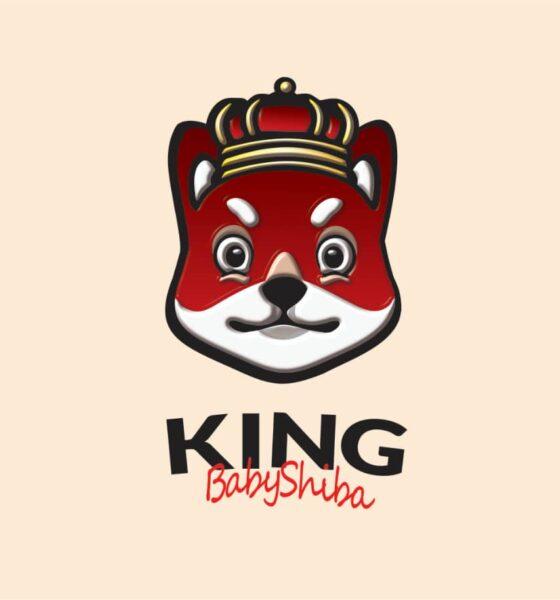 kingbabyshiba
